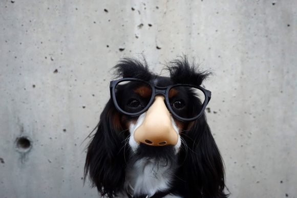 dog with funny mask
