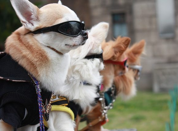Model Puppy Dog Sunglasses Japan Fashion