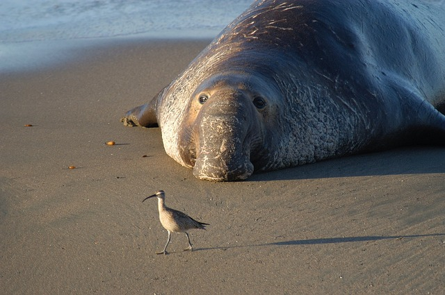 6 Points In The Secret Life Of Elephant Seals
