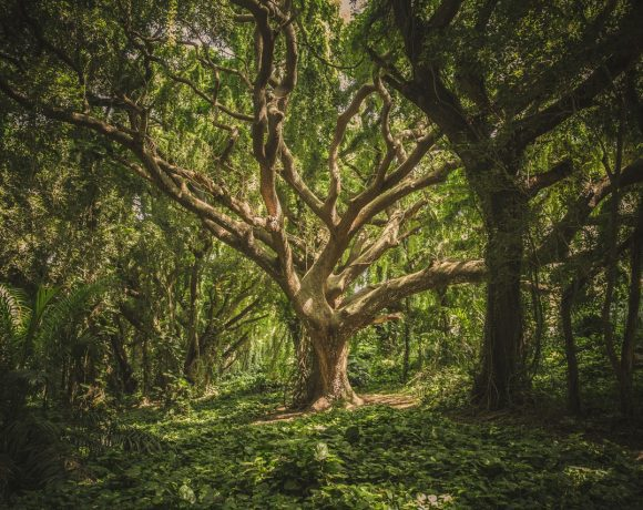 Nature Power: These People Have Changed The World Only Using Trees