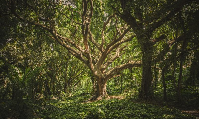 Nature is Awesome: Here are 10 Oldest Living Trees in the World