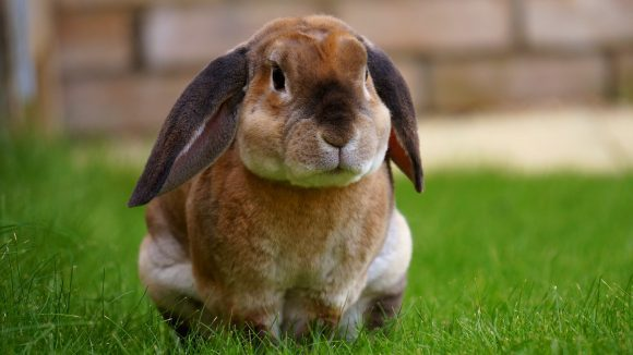 rabbits cute