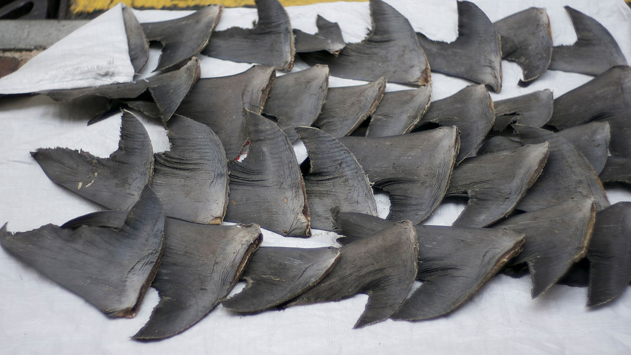 shark fins by Cloneofsnake wikimedia commons