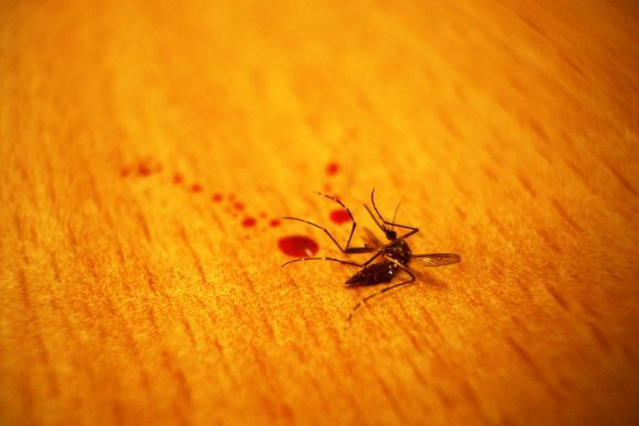 Dead_mosquito (Wikimedia Commons)