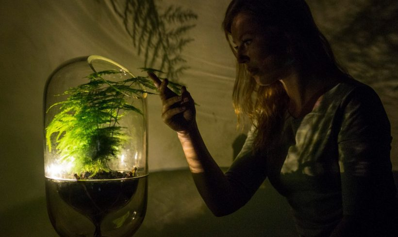 The Green Light: Photosynthesis-Powered Lighting Is Making Its Way