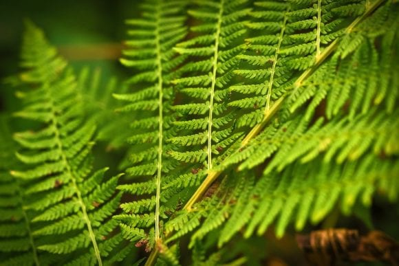 Green Plant Leaves Forest Nature Fern