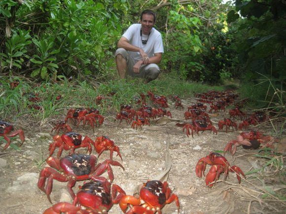 Ian_Usher_Christmas_Island_Crabs (Wikimedia Commons)