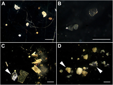 Microplastics_in_sediments (Wikimedia Commons)