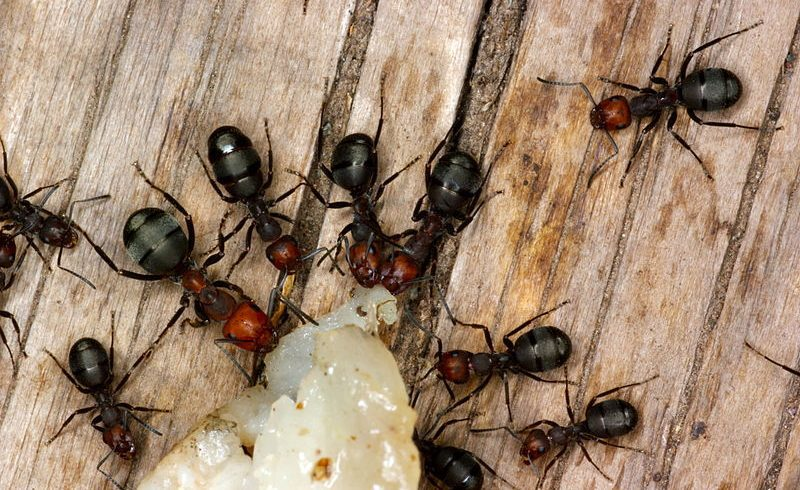 4 Amazing Facts About Ants Empire You Should Know