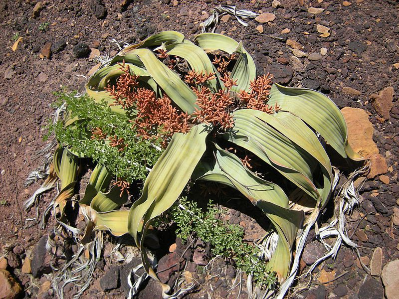 The Toughest Plant On Earth That Grows In The Toughest Area