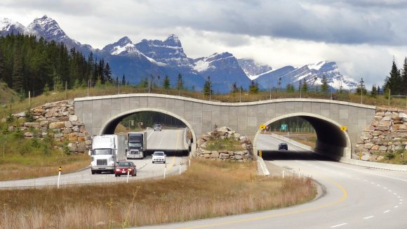 Wildlife_overpass_Trans-Canada_Hwy_between_Banff_and_LakeLouise_Alberta (Wikimedia Commons)