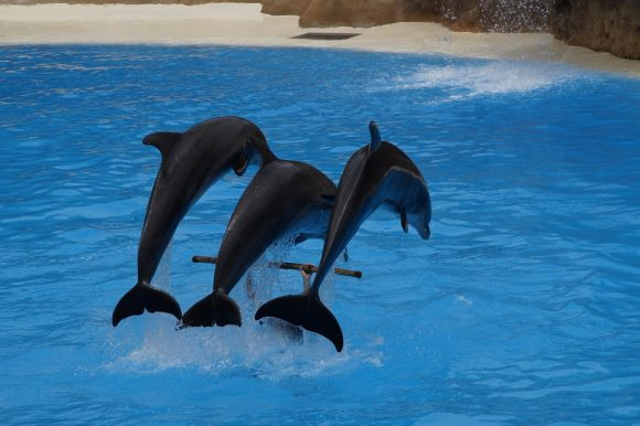 dolphins circus