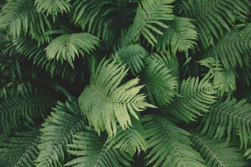 Getting Closer With One Of The Most Ancient Plants: Ferns