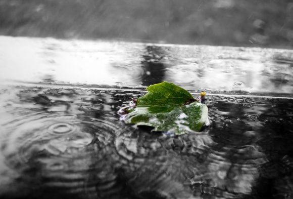 green-leaf-in-the-rain