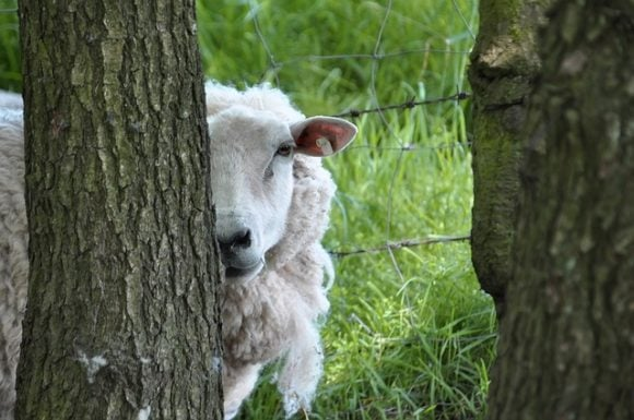 Funny Sheep Tree