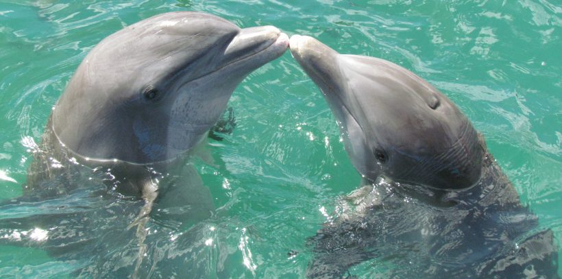 The Ban Is Coming! Canada Plans To Ban Capturing Dolphins And Whales