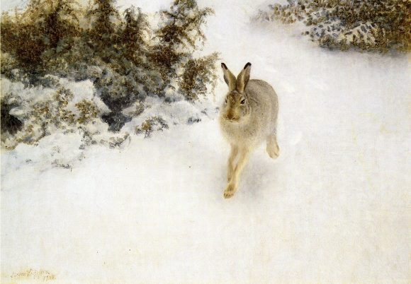 winter hare (Wikimedia Commons)