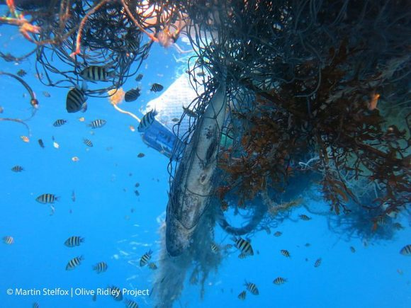 Marine_organisms_entangled_in_a_ghost_net_within_the_Maldives_(Wikimedia Commons)