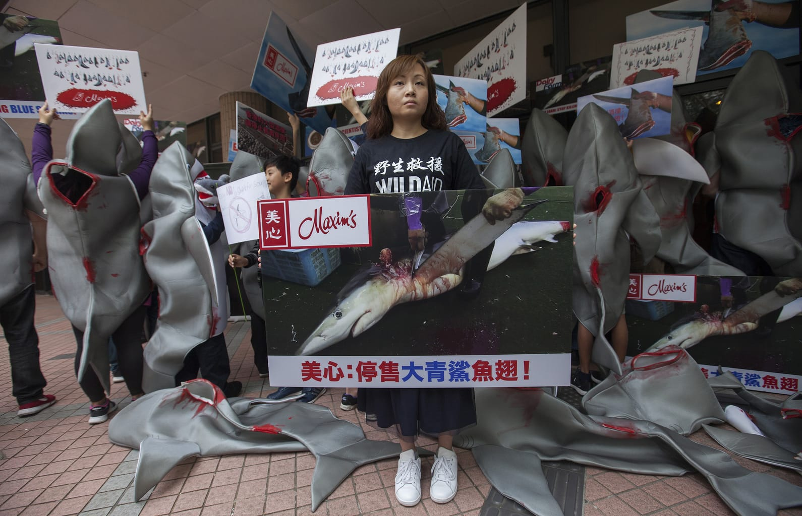 shark fin protest by Socheid wikimedia commons