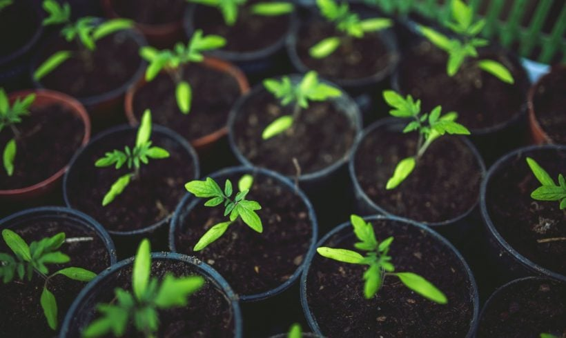 Ways and Tips to Grow Your Own Food in Small Spaces