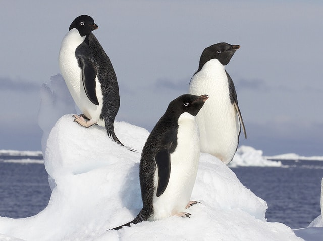 The Lost Penguins: Thousands Penguins Discovered In Isolated Islands