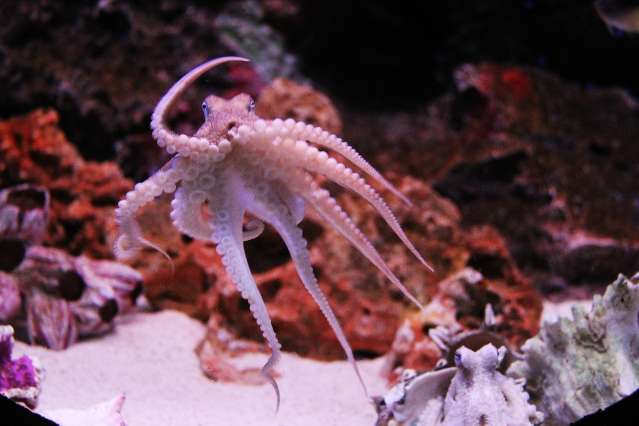 underrated animals 7 facts about octopuses you didn t know before