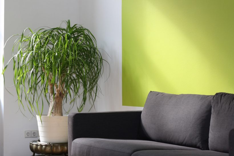 Want to Bring Nature to Your House? Here's 6 Tips to Help You