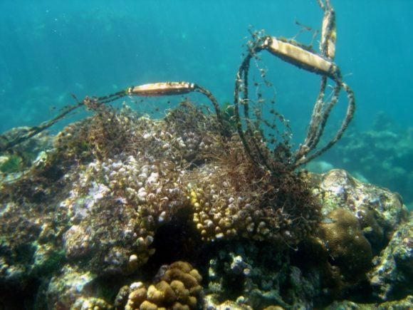 reef (NOAA)