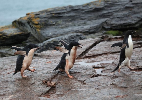 Running around chicks by Liam Quinn
