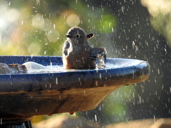 small-bird-taking-a-bath