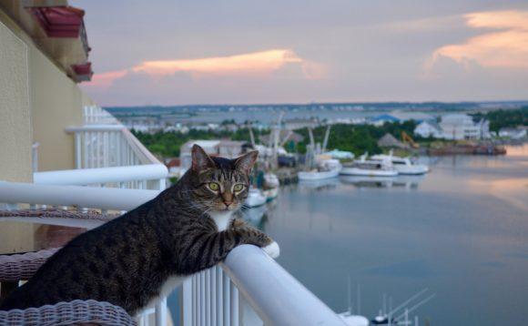 vacation cat