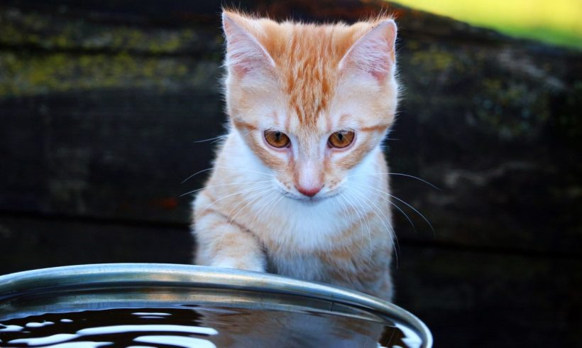 Ever Wondered Why Most Cats Are Afraid Of Water?