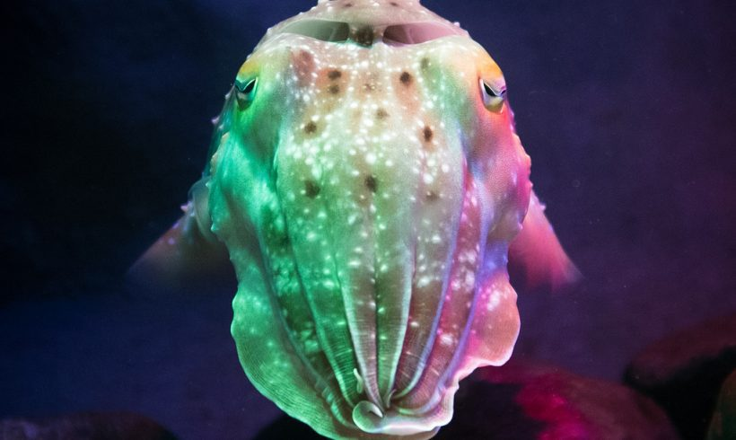 Cuttlefish: The Chameleon Of The Sea And Master Of Camouflage