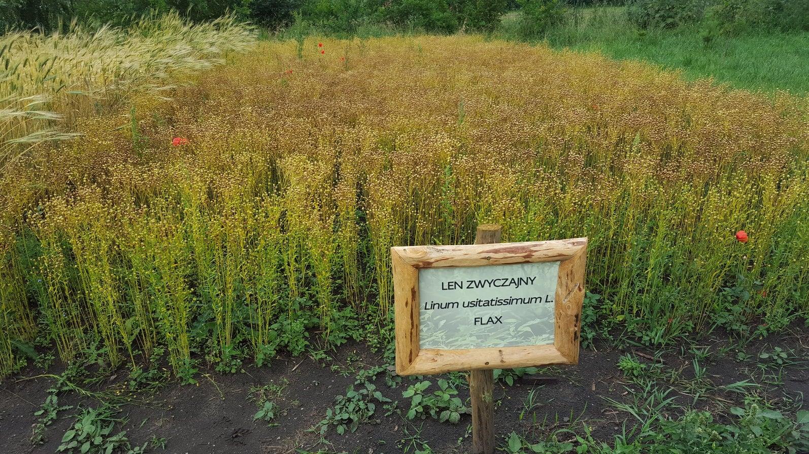 Flax became the main material for Ekoa