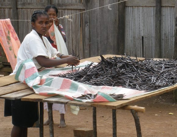 Woman_sorting_vanilla_in_Sambava_Madagascar-Wikimedia-Commons