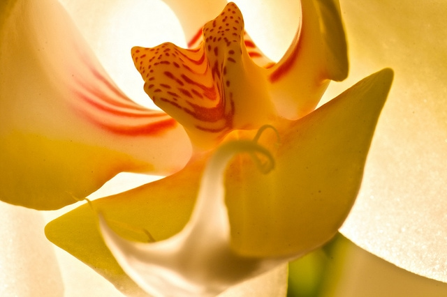A Few Clues To Show You Why Orchids Are So Special