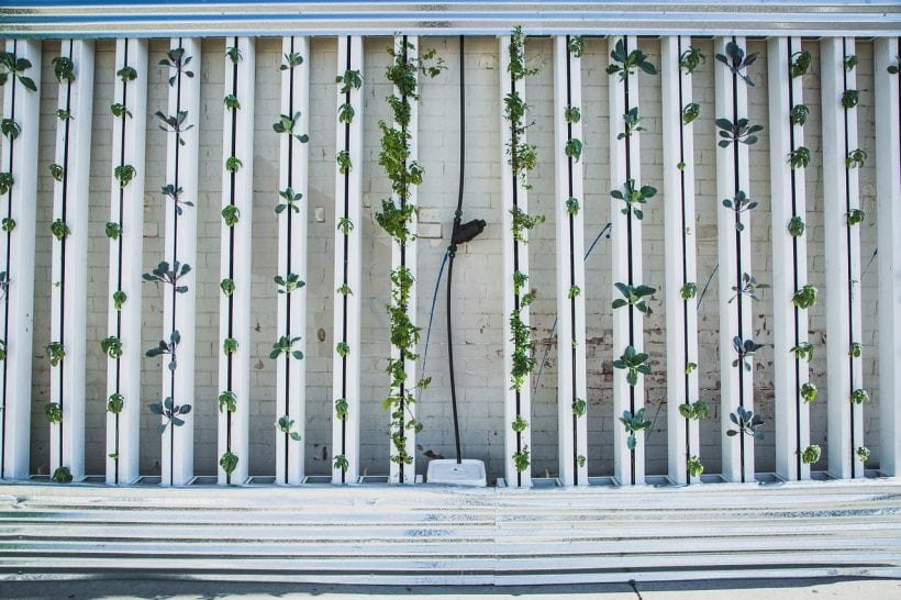 5 Reasons Why Vertical Farming is the Future of Humankind