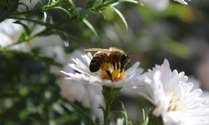 Honey Bees Are Declining and It's Not Good for Our Planet