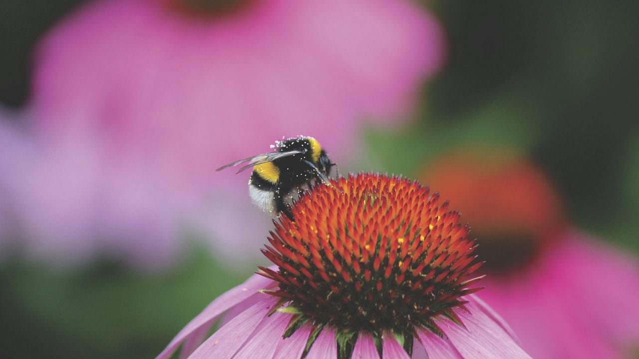 no natural pollination means more effort and hard work
