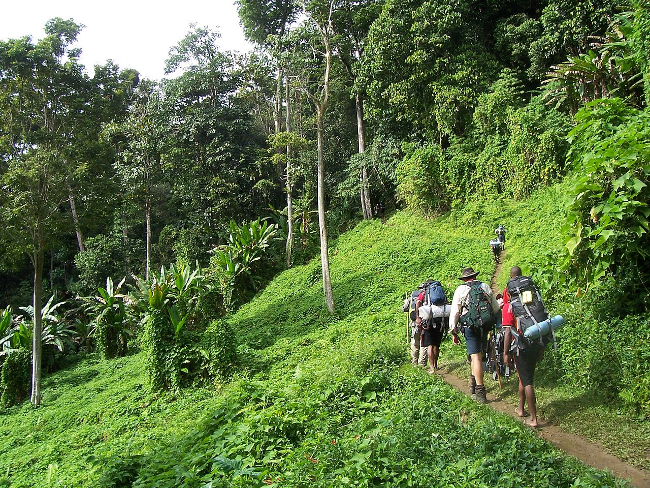 Kokoda Trail by Luke Brindley Wikimedia Commons