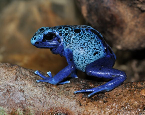 The Rarest Pigment On Earth Is Blue Pigment, But Why Blue Is Everywhere?