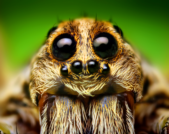 The Warming Of This Earth Is Making These Spiders Bigger!
