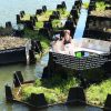 Now You Can Find Floating Public Park Made From Recycled Plastic
