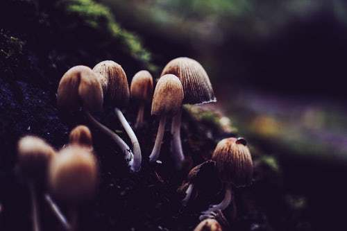 Don't You Know That Fungi Have The Ability To Shape The World?