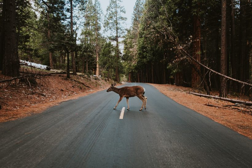 Faith In Humanity Restored: These People Help Animals Crossing The Streets