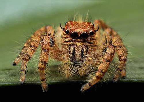 jumping spider 3