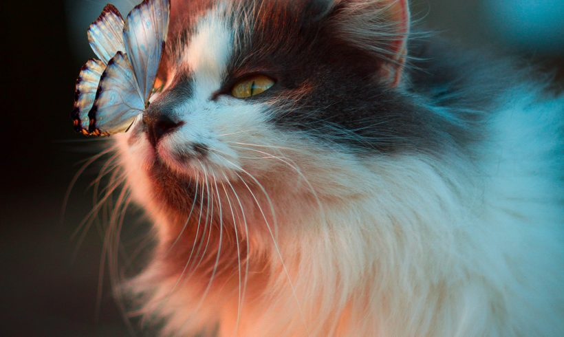 Natural Ways To Get Rid Of Annoying Flea From your Beloved Pets