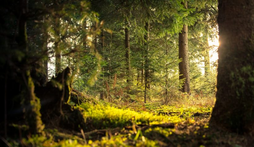 10 Lush Forest Destinations for People Who Truly Love The Woods