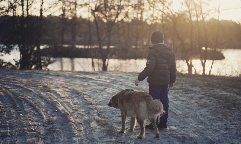 9 Pet-Friendly Places in Asia, Europe, and USA for Dog Parents