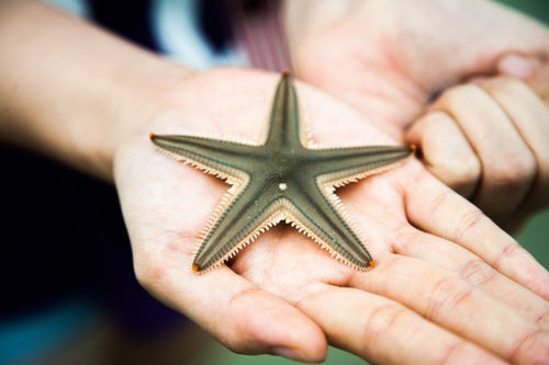 starfish touching